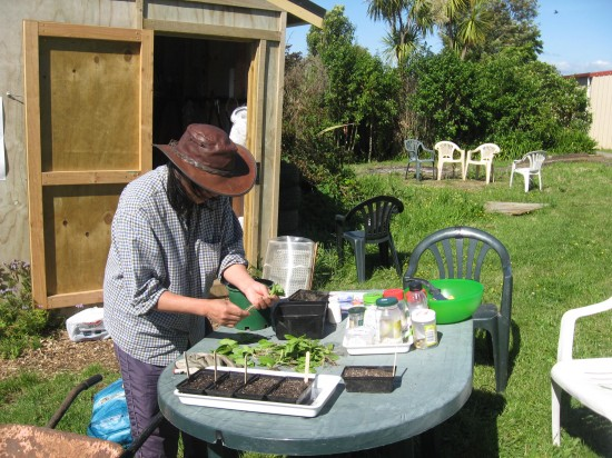 transplanting seedlings at the WIC Spring Workshop last week