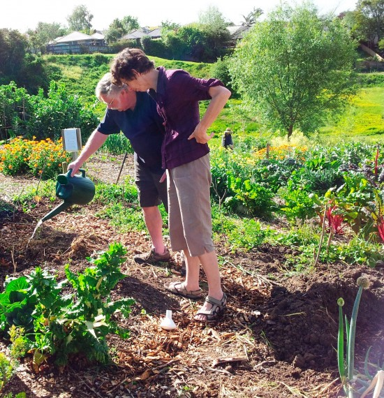 Ian and Margery watering lettuces